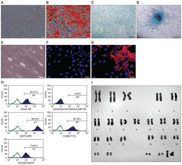 Image of Characterization and differentiation of Mesenchymal Stem Cells