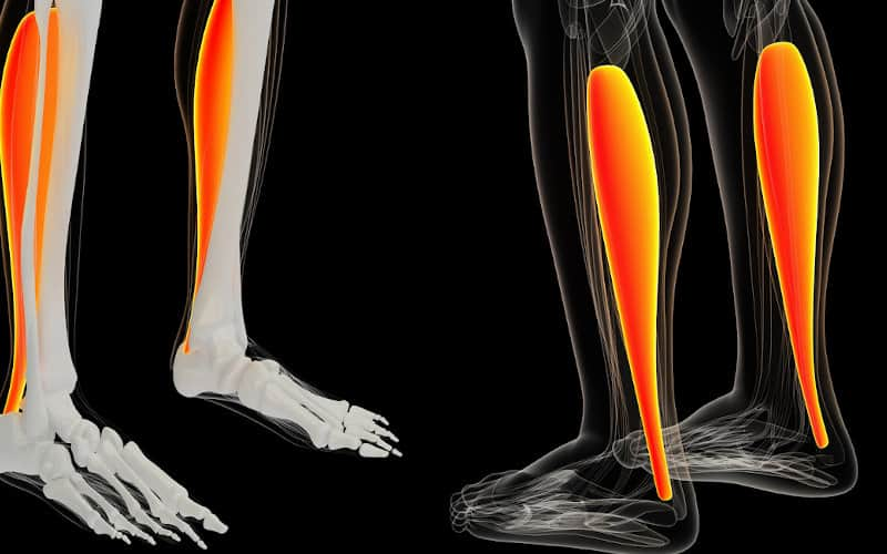 Graphic of Achilles Tendons