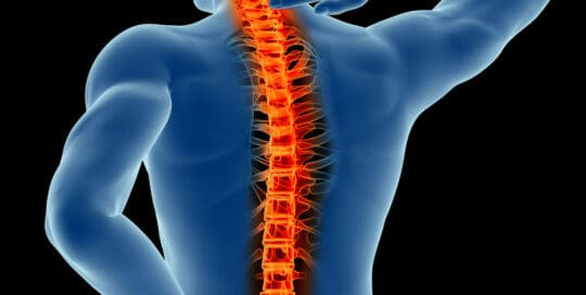 Graphic of Spine